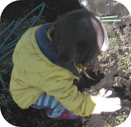 球根の植え付け20200201